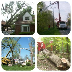 Tips for Choosing a Tree Service Provider